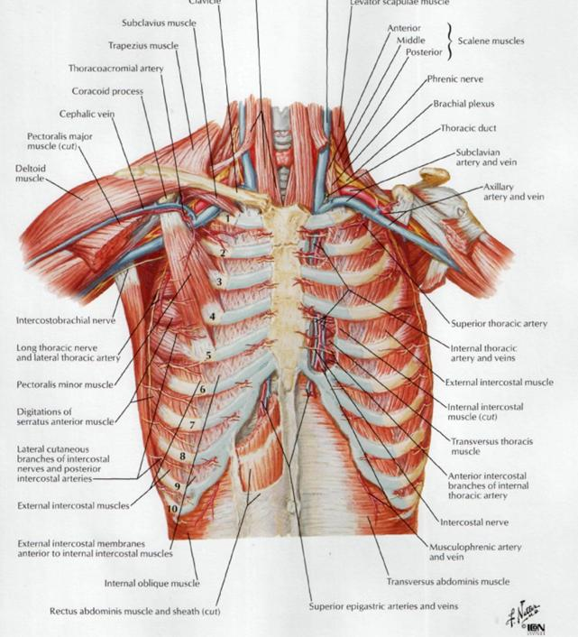 sub clavius revolution health centre thoracic outlet syndrome numbness down arms and hands colac camperdown